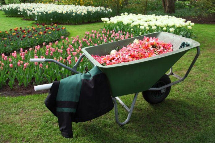 ogrod, kwiaty